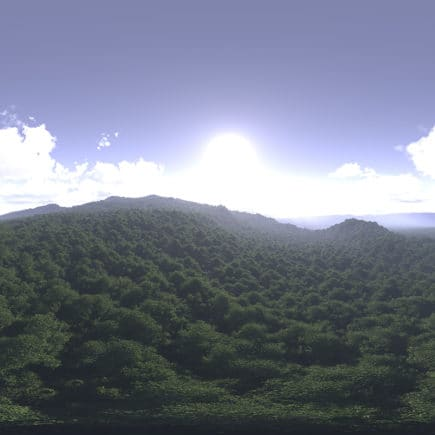 Late Morning Forest HDRI Sky