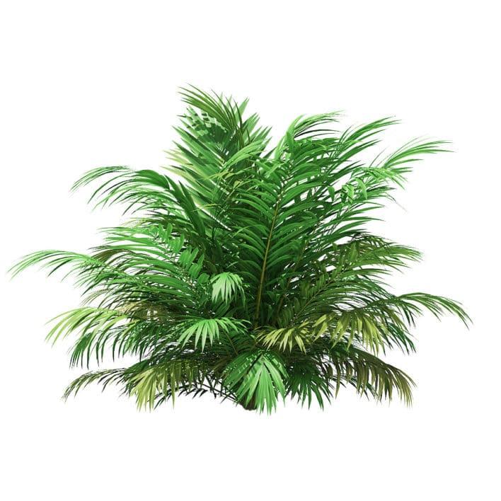 Golden Cane Palm Tree 3D Model 2.7m