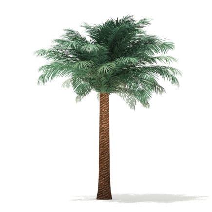 Silver Date Palm Tree 3D Model 4.7m