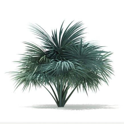 Silver Fan Palm Tree 3D Model 1.8m