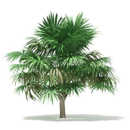 Thatch Palm Tree 3D Model 3.8m