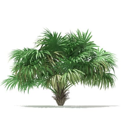 Thatch Palm Tree 3D Model 2.6m