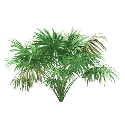 Thatch Palm Tree 3D Model 1.9m