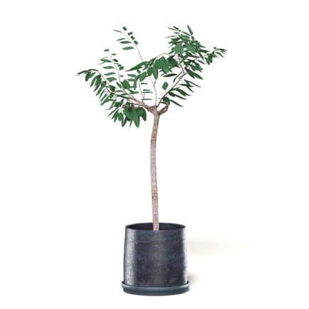 Small Tree 3D Model in Black Pot
