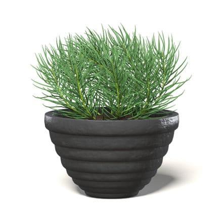 Plant in Black Pot 3D Model