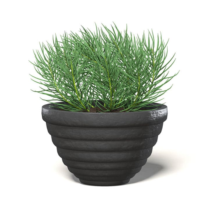 Plant in Black Pot 3D Model