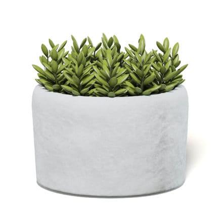 Plant in Stone Pot 3D Model