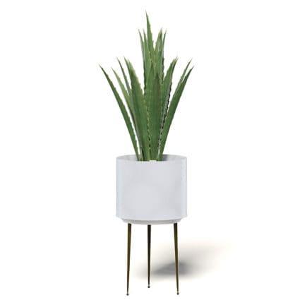 Aloe in White Pot 3D Model
