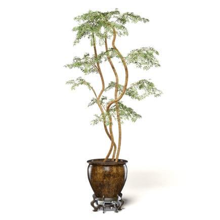 Tree in Metal Pot 3D Model