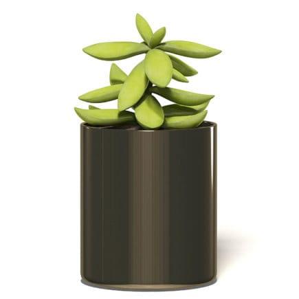 Plant 3D Model in Metal Pot