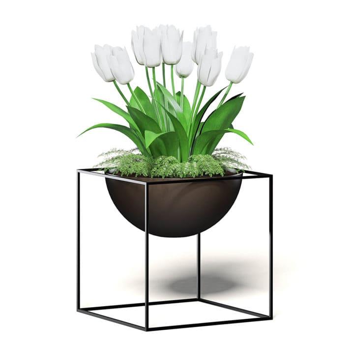 White Tulips 3D Model