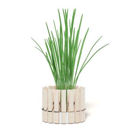 Plant 3D Model with Clothes Peg Pot