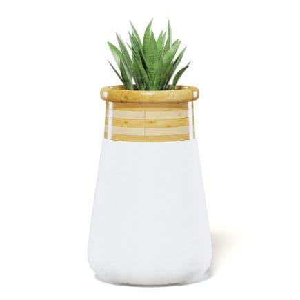 Plant 3D Model in Large Modern Pot