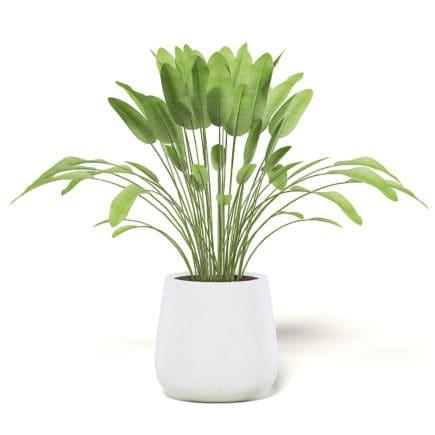 Plant 3D Model in White Pot