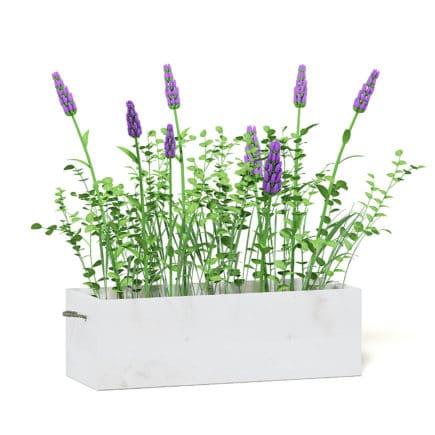 Flowers 3D Model in Wooden Box