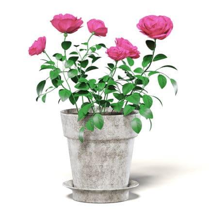 Pink Roses 3D Model in Ceramic Pot