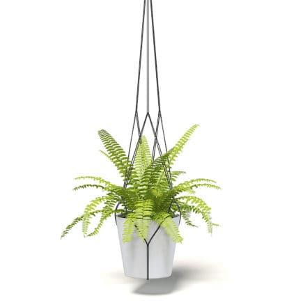 Fern 3D Model in Hanging Pot