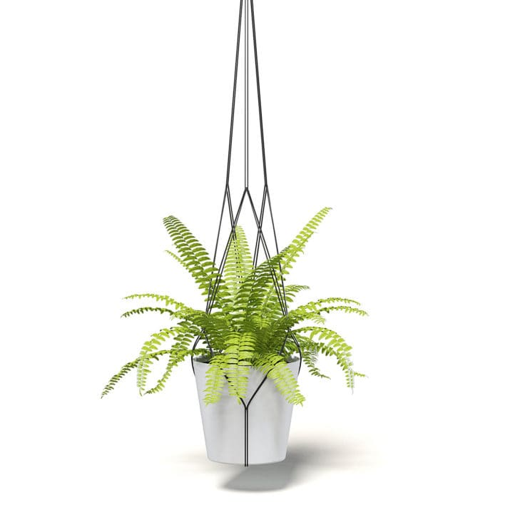 Fern 3D Model in Hanging Pot